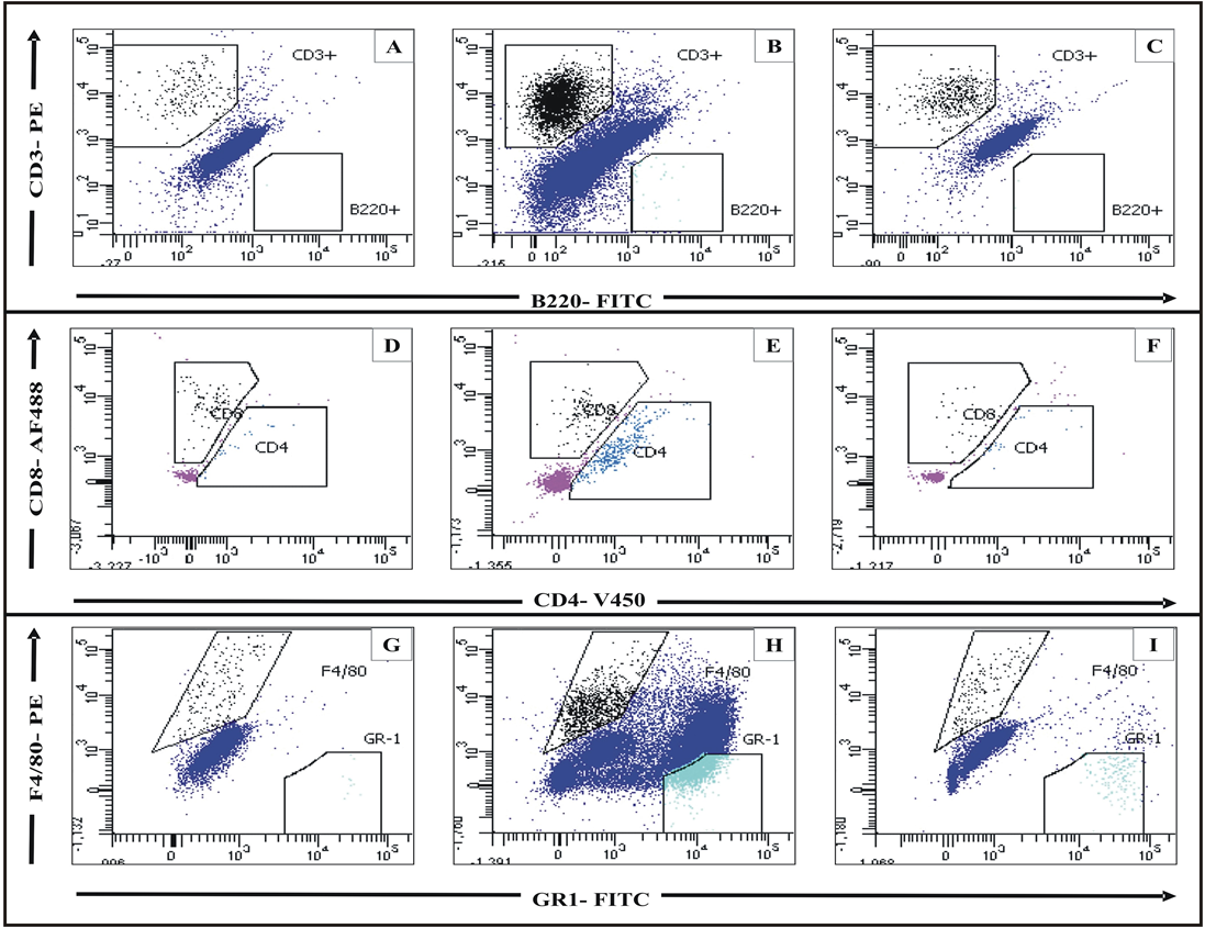 Figure 13 Flow cytometric analysis of lymphocytes in the ear tissue pooled from three mice for each experimental group, done on BD FACSAria and analysed using BD VACSDiva software