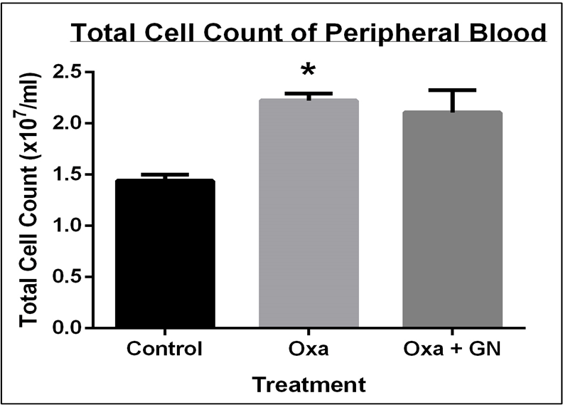 Figure 4 GN treatment successfully reduced the infiltration of cells in the blood
