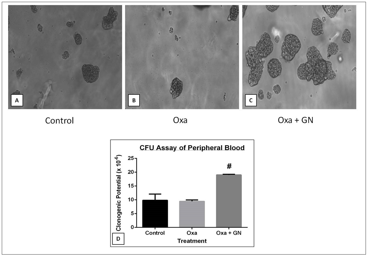 Figure 7 Effect of GN on the clonogenic potential of blood cells as observed under FLoid Cell Imaging Station at 20X