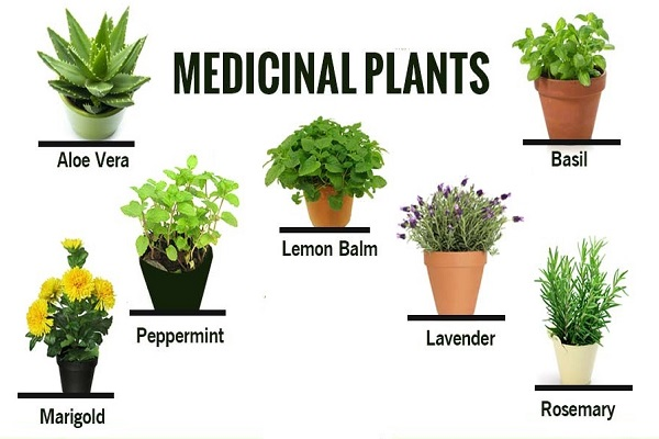 The most useful medicinal herbs to treat diabetes